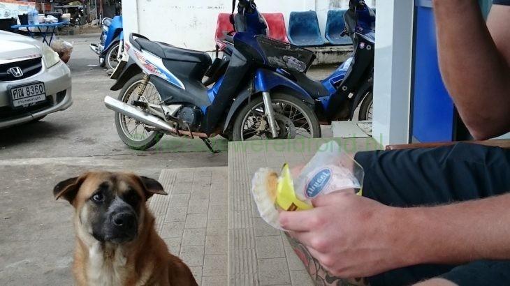 Hoe houd je een erfhond te vriend tijdens het fietsen?